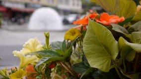 Bloemen in straat in Pont LÂ'Eveque, oud dorp in Normandië Frankrijk stock video