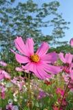 Bloemen in Suan Luang Rama.9 Thailand Stock Fotografie