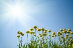 Bloemen tegen blauwe hemel royalty-vrije stock fotografie