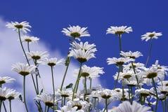 Bloemen tegen Blauwe Hemel Royalty-vrije Stock Afbeeldingen