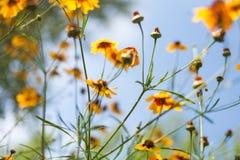 Bloemen tegen blauwe hemel Royalty-vrije Stock Afbeelding