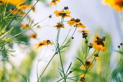 Bloemen tegen blauwe hemel Royalty-vrije Stock Foto