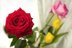 Bloemen tegen de internationale Vrouwen` s Dag op 8 Maart Royalty-vrije Stock Afbeeldingen