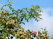 Bloemen tegen een de zomerhemel royalty-vrije stock afbeelding