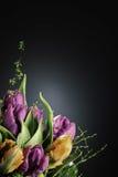 Bloemen tegen een donkere achtergrond Stock Foto