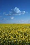Bloemen tegen hemel Royalty-vrije Stock Foto
