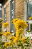 Bloemen tegen vensters van landelijk huis Stock Afbeeldingen