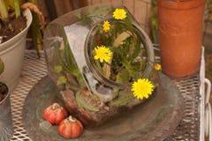Bloemen in terrarium Stock Foto