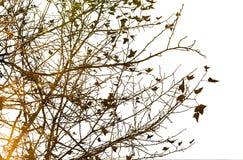 Bloemen texturen Stock Foto
