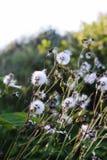 Bloemen tijdens daling Royalty-vrije Stock Afbeelding