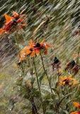 Bloemen tijdens een de zomerregen Royalty-vrije Stock Foto