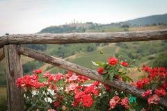 Bloemen in Toscanië Stock Foto
