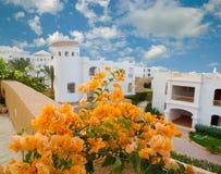 Bloemen in tropisch hotel royalty-vrije stock foto