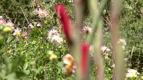 Bloemen in tuin stock video