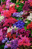 Bloemen in tuin Stock Afbeelding