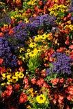 Bloemen in tuin Stock Afbeeldingen