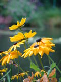 Bloemen in tuin Royalty-vrije Stock Fotografie