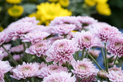 Bloemen in tuin Royalty-vrije Stock Foto's
