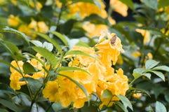 Bloemen in tuin royalty-vrije stock afbeelding