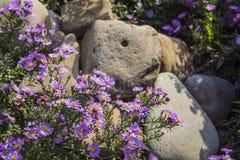 Bloemen tussen de stenen Stock Fotografie