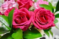 Bloemen Twee kleuren Rode en witte rozen Stock Afbeeldingen