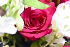 Bloemen Twee kleuren Rode en witte rozen Stock Fotografie