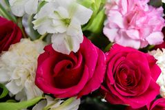 Bloemen Twee kleuren Rode en witte rozen Stock Afbeelding