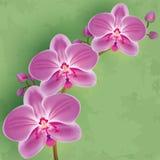 Bloemen uitstekende achtergrond met bloemorchidee Royalty-vrije Stock Foto
