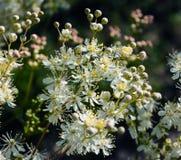Bloemen uitstekende donkere achtergrond Royalty-vrije Stock Foto's