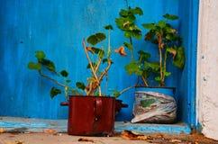 Bloemen vóór deur ofmy huis stock foto's