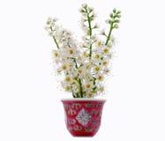 Bloemen in vaas Stock Afbeeldingen