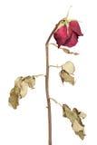 Bloemen & Vaas Royalty-vrije Stock Afbeeldingen