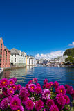 Bloemen van Alesund Royalty-vrije Stock Fotografie