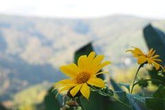 Bloemen van berg Royalty-vrije Stock Foto's