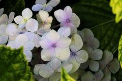 Bloemen van Brazilië Royalty-vrije Stock Foto's