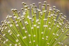 Bloemen van Braziliaanse hoogte stock foto