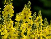 Bloemen van Bulgarije royalty-vrije stock afbeelding