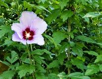 Bloemen van Bulgarije royalty-vrije stock afbeeldingen