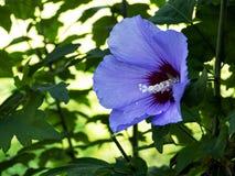 Bloemen van Bulgarije stock foto