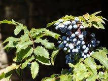 Bloemen van Bulgarije stock foto's