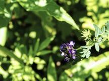 Bloemen van Bulgarije royalty-vrije stock fotografie