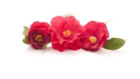 Bloemen van camelia Stock Afbeelding
