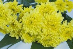 Bloemen van de boeket de Gele chrysant Stock Fotografie