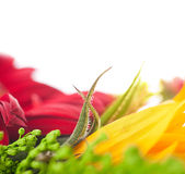 Bloemen van de herfst, blured Royalty-vrije Stock Fotografie