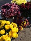 Bloemen van de herfst op asfalt royalty-vrije stock afbeelding