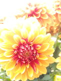 Bloemen van de lente Stock Afbeeldingen