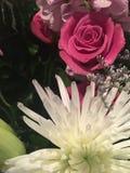 Bloemen van de Lentetijd royalty-vrije stock afbeelding
