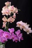 Bloemen van de schoonheids de kleurrijke orchidee stock afbeeldingen