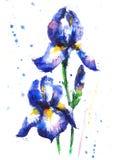 Bloemen van de waterverf hand-drawn iris Royalty-vrije Stock Foto's
