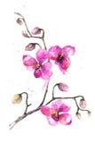 Bloemen van de waterverf hand-drawn orchidee Royalty-vrije Stock Foto's